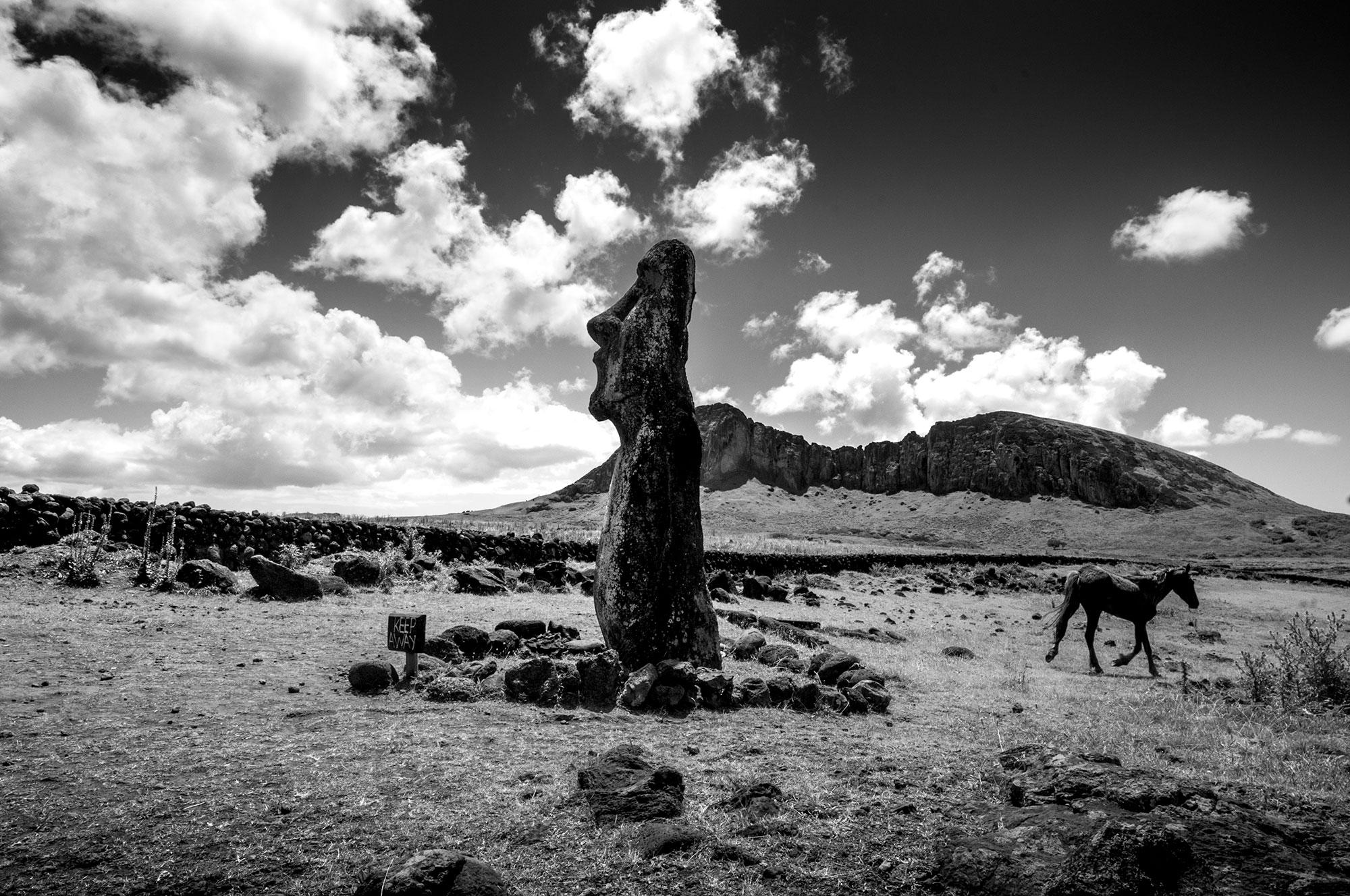 Photographie en noir et blanc d'un cheval sauvage sur l'Île de Pâques.