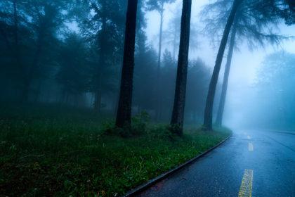 Route qui traverse la forêt