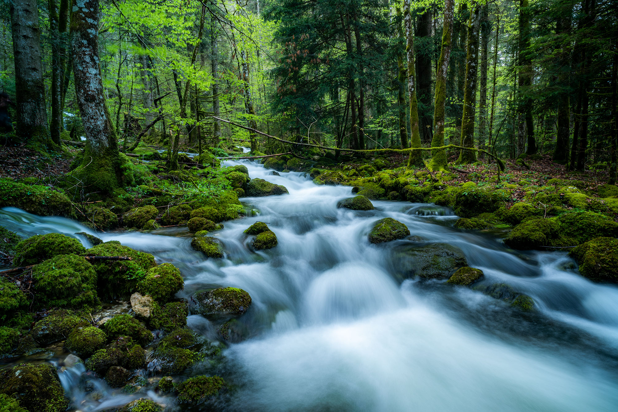 Forest and river landscape photography, in Switzerland. Image by Jennifer Esseiva.