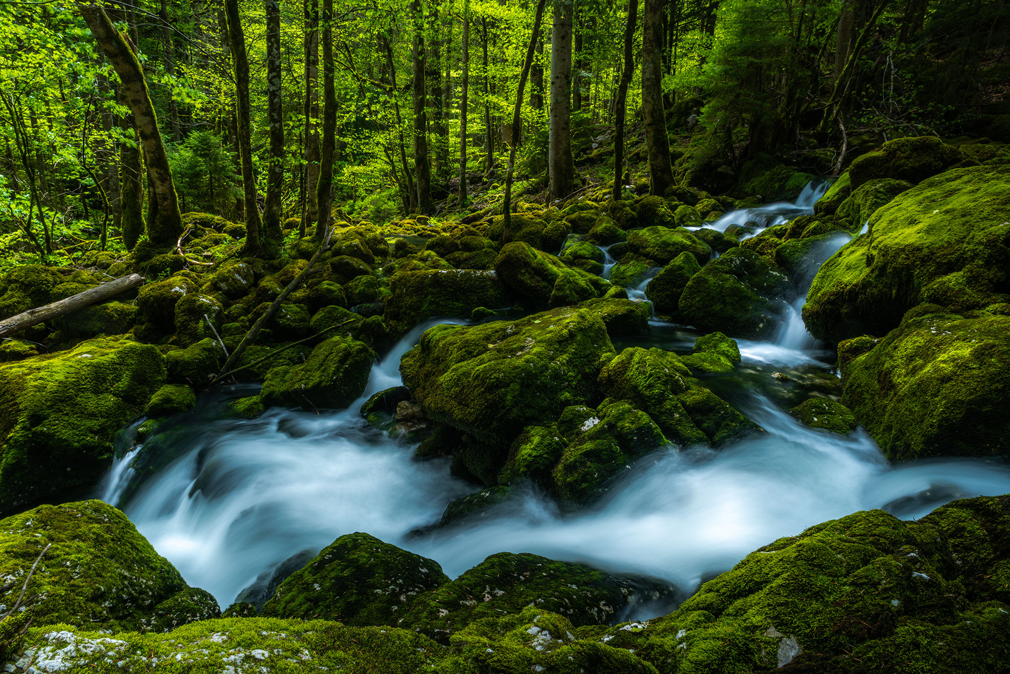 Forest and river landscape photography, in Switzerland.