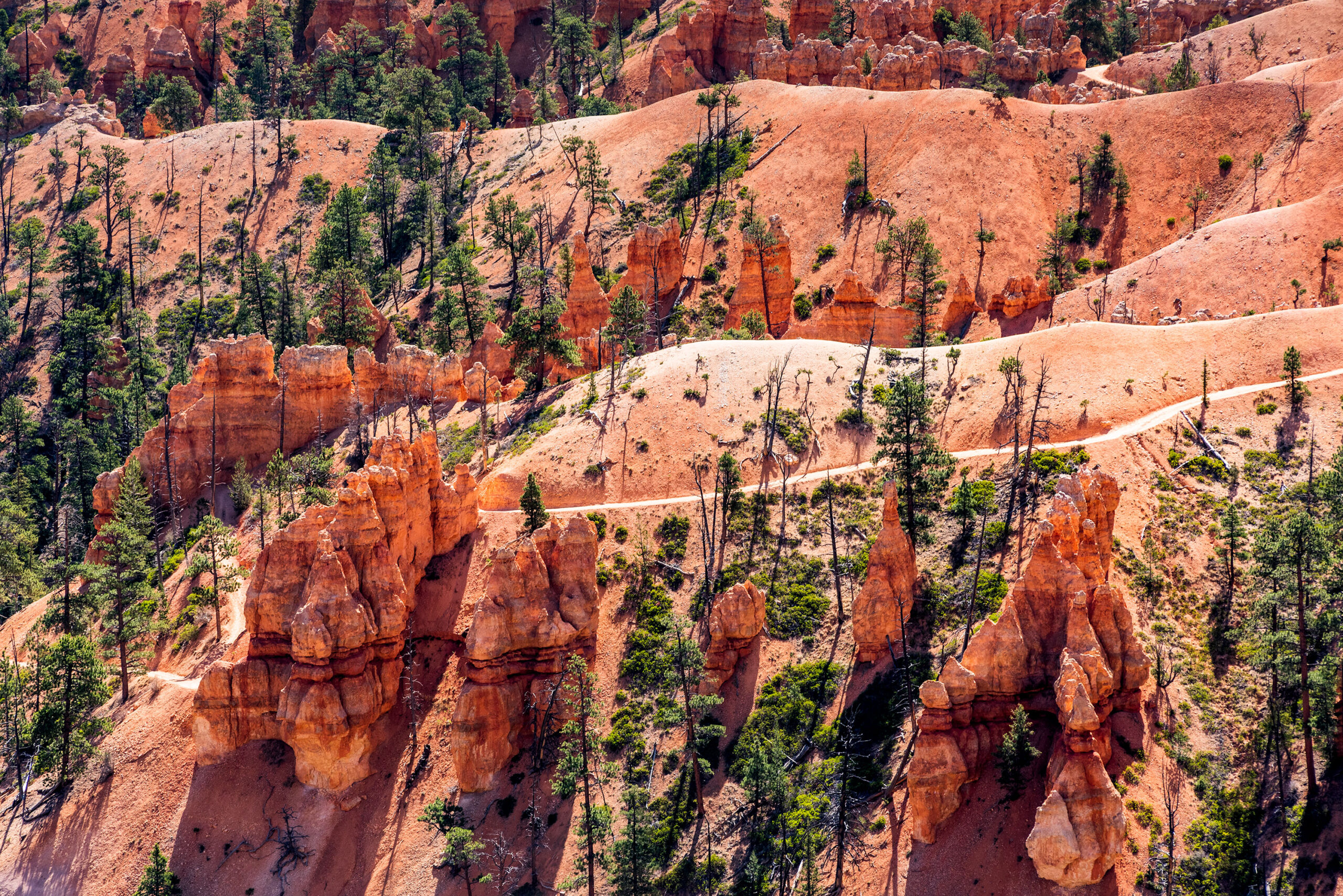 Fine art close-up photography of Bryce Canyon.