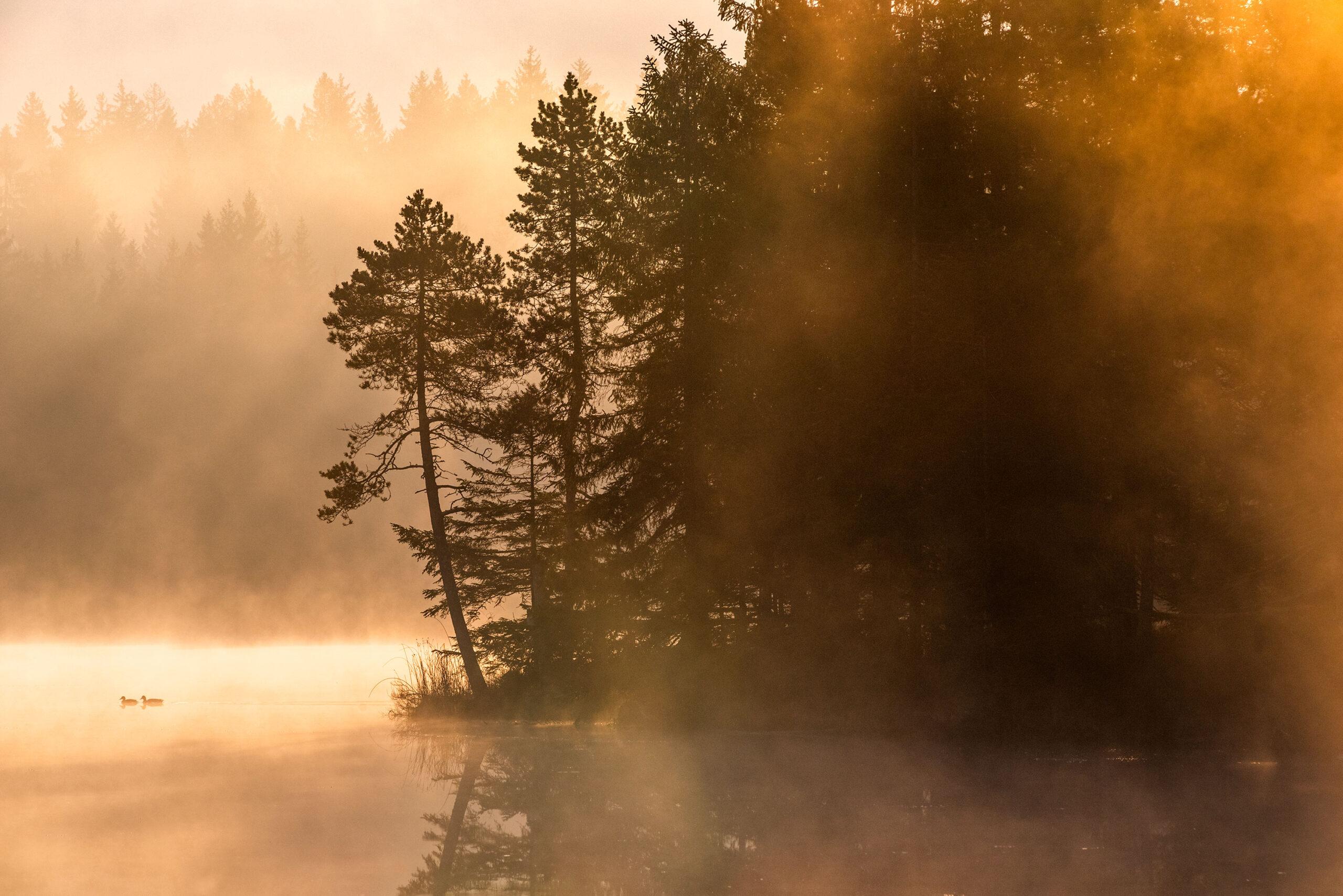 Yellow sunrise photography of the Gruère Lake located in Switzerland. Image by Jennifer Esseiva.