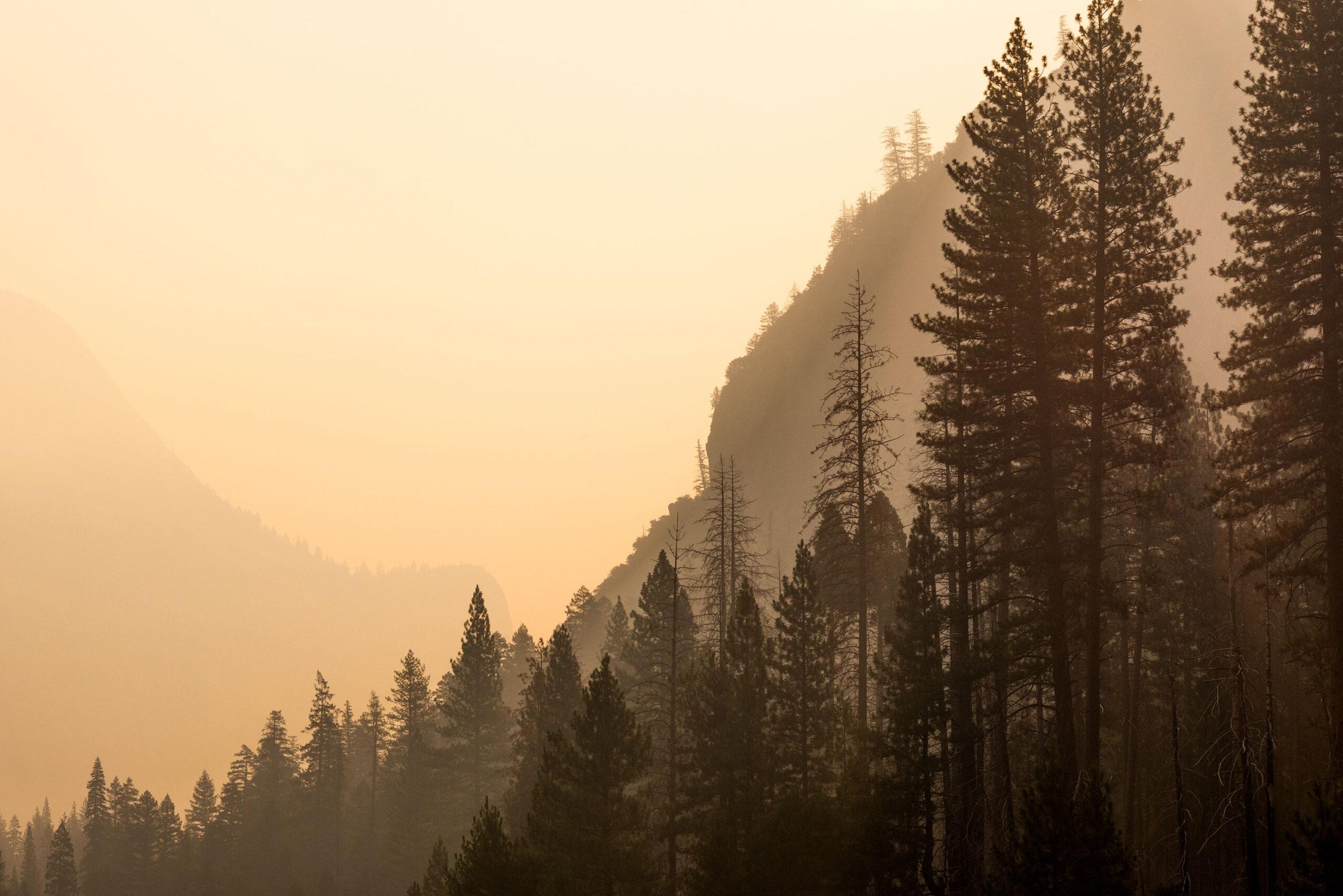 Sunrise photography of Yosemite forest taken by landscape photographer Jennifer Esseiva.